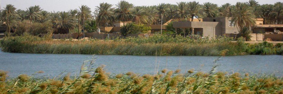 الزهاء للتنمية البيئية.. معا لبيئة عراقية اجمل